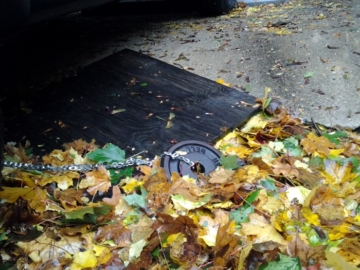 Our parking lot after Hurricane Sandy: I noticed something strange in the leaves.